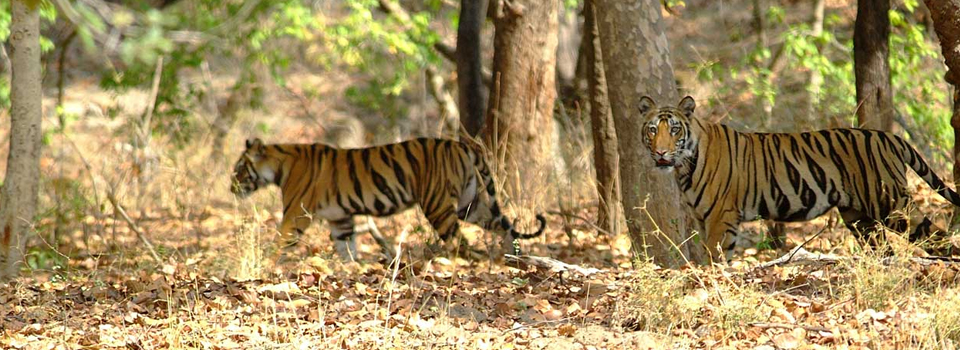 MP-Pench-National-Park
