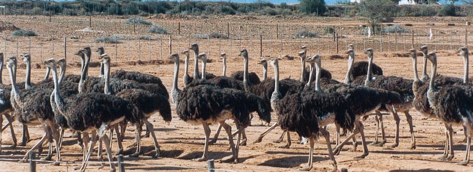 South-Africa-Oudtshoorn