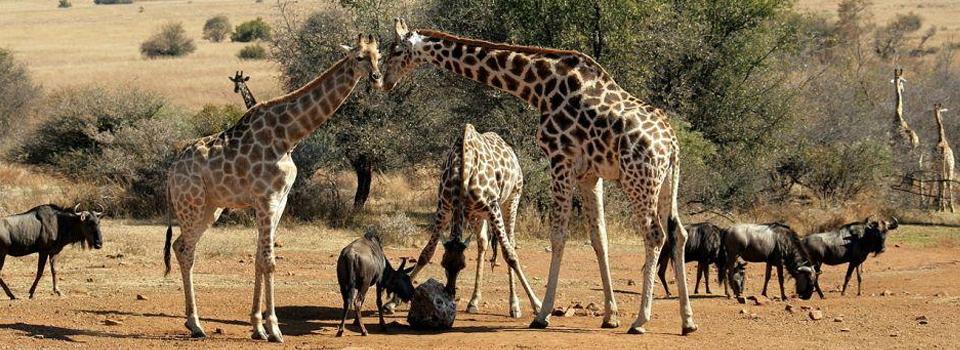South-Africa-Pilanesberg-National-Park
