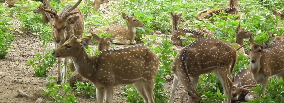 Nehru-Zoological-Park-Andhra
