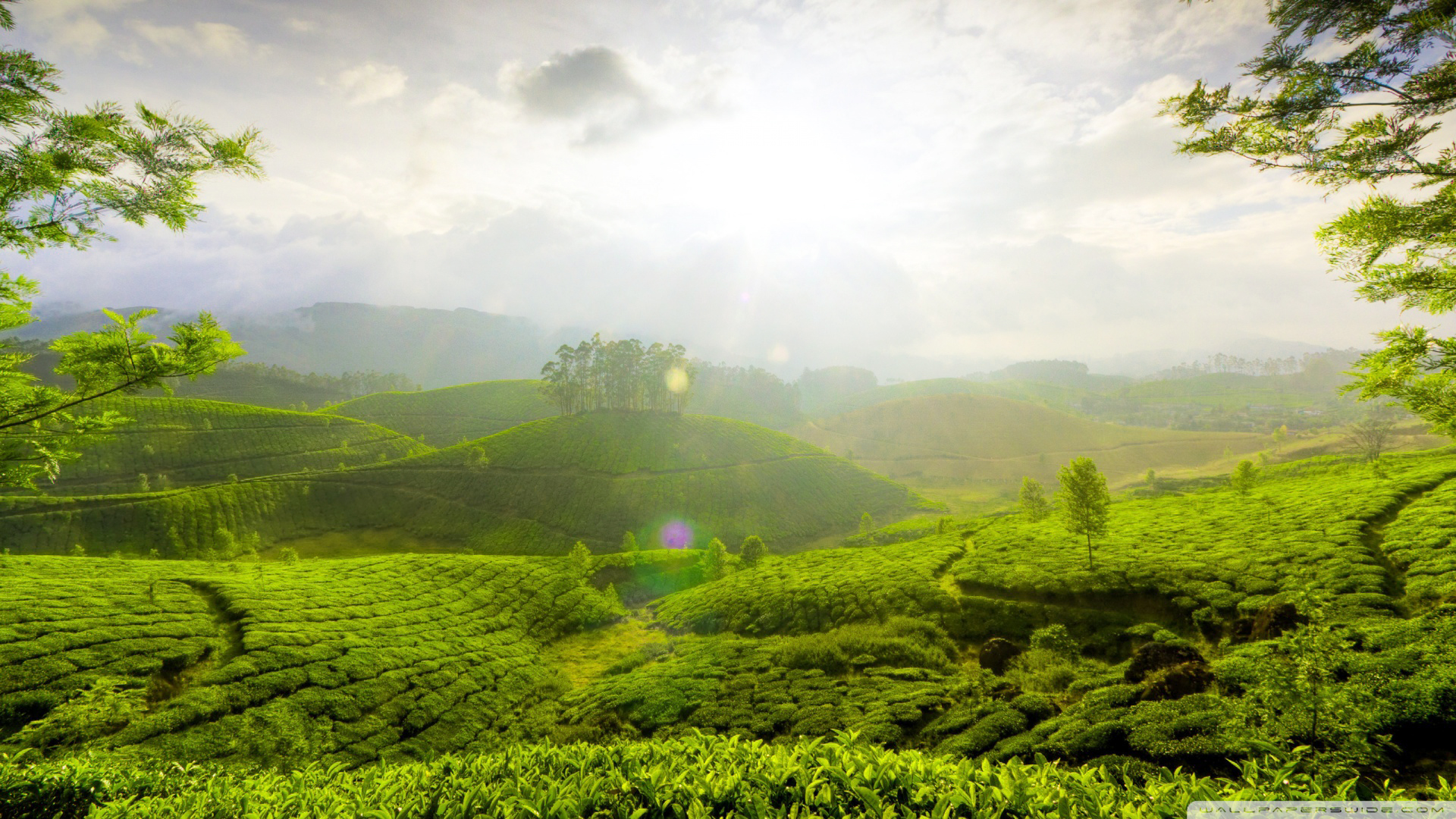 munnar_hill_india-wallpaper-1920x1080